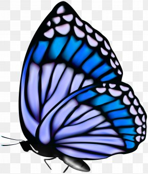 Butterfly Clip Art Image - Monarch Butterfly Clip Art PNG