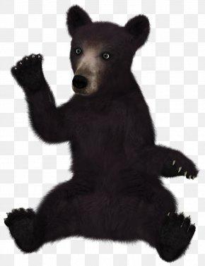 Black Bear - Polar Bear Brown Bear Giant Panda Asian Black Bear Glacier Bear PNG