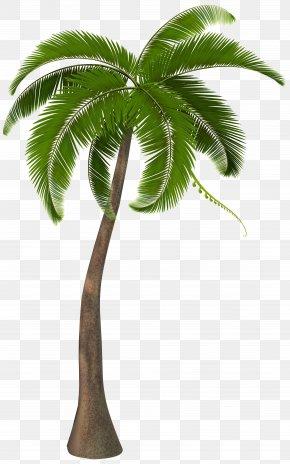 Beautiful Palm Tree Clipart Image - Arecaceae Clip Art PNG
