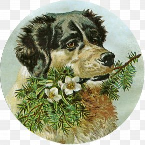 Cocker Spaniel Sporting Group - Border Collie PNG