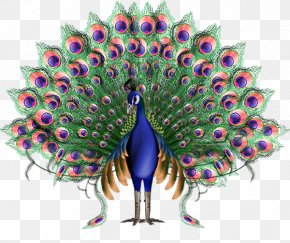 Peacock - Krishna Animation Peafowl PNG