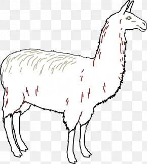 Llama Outline - Llama Alpaca Clip Art PNG