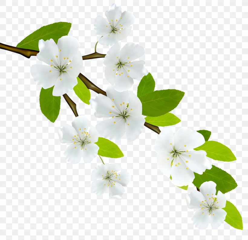 Branch Clip Art, PNG, 8000x7761px, Branch, Autumn, Blossom, Cherry Blossom, Dogwood Download Free