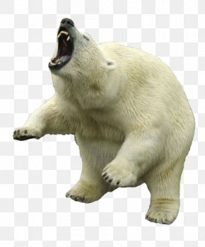 Polar Bear Clipart - Polar Bear PNG