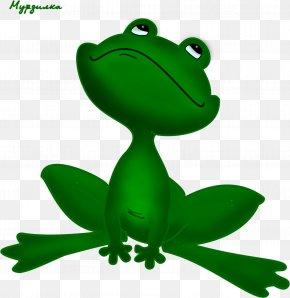 Frog - Tree Frog True Frog Drawing Clip Art PNG