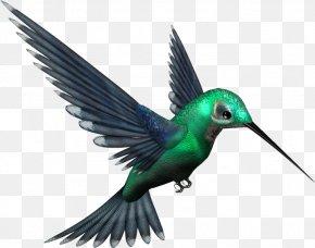 Hummingbird Free Download - Hummingbird Clip Art PNG