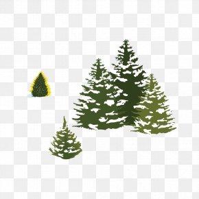 Snow Pine - Pine Spruce Christmas Tree Snow PNG