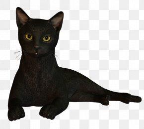 Funny Cat - Black Cat Bombay Cat Korat Havana Brown Burmese Cat PNG