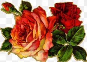 Watercolor Roses - Vintage Clothing Antique Flower Clip Art PNG