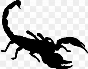 Month Of May Cartoon Scorpion - Scorpion Clip Art Vector Graphics Openclipart PNG