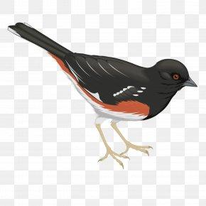 Vector Black Raven - Bird Common Raven PNG