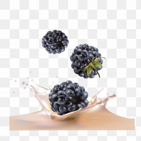 Vector Blueberry - Juice Blackberry Fruit Blueberry PNG