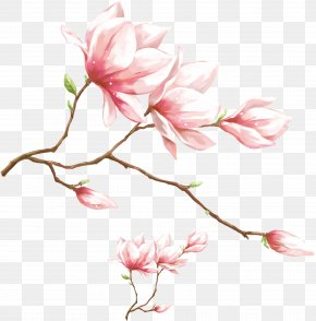 Watercolor Pink Magnolia Flower - 1080p High-definition Video Display Resolution Wallpaper PNG