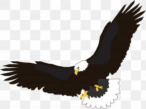 Flying Eagle Image, Free Download - Flight Eagle Clip Art PNG