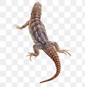 Brown Lizard - Lizard Reptile Chameleons PNG