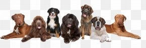 Cute Dog Collection - Dog Daycare Cat Kennel Pet PNG