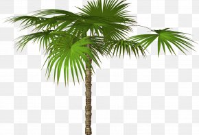 Jungle Tree Free Download - Arecaceae Tree Image Resolution Clip Art PNG