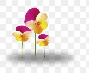 Flower - Cut Flowers Tulip Plant Desktop Wallpaper PNG