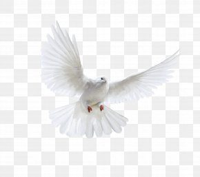 White Flying Pigeon Image - Bird PNG