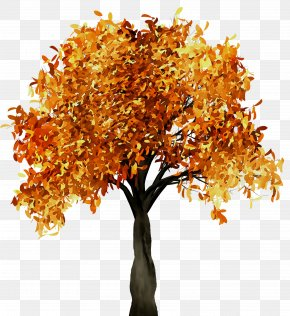 Fall Tree Branch Trunk PNG