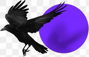 Bird - Rook American Crow Bird Common Raven Stock Photography PNG