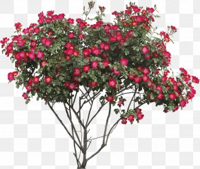 Red Flower - Flower Tree Shrub Clip Art PNG