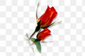Photoshop - Cut Flowers Tulip Floral Design Floristry PNG
