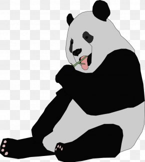 Panda - Giant Panda Bear Red Panda Cuteness Clip Art PNG