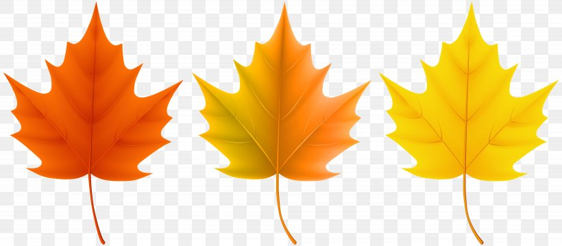 Red Maple Sugar Maple Autumn Leaf Color, PNG, 8000x3503px, Autumn, Autumn Leaf Color, Leaf, Maple Leaf, Music Download Download Free