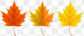 Autumn Leaves Set Clip Art Image - Red Maple Sugar Maple Autumn Leaf Color PNG
