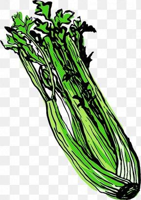 Plant Stem Leaf Vegetable - Vegetable Plant Herb Leaf Vegetable Plant Stem PNG