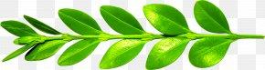 Leaf - Leaf Branch Euclidean Vector PNG