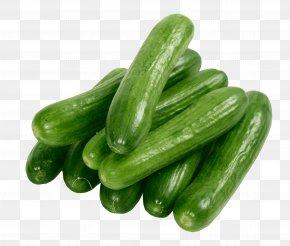 Cucumbers - Sea Cucumber As Food Raita PNG