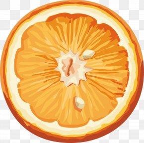 Orange Image, Free Download - Orange Clip Art PNG