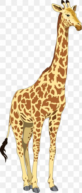 Giraffe Cartoon - Baby Giraffes Clip Art PNG