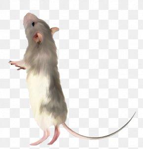 Cute Little Mouse - Computer Mouse Rat PNG