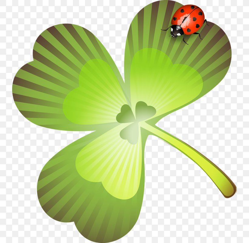 Saint Patrick's Day Holiday Collage Clip Art, PNG, 740x800px, 2017, Saint Patrick S Day, Clover, Collage, Flora Download Free
