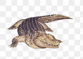 Alligator Animal - Nile Crocodile Alligator Amphibian Animal PNG