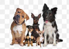 Puppy - Puppy Samoyed Dog Rottweiler Bulldog Dog Breed PNG