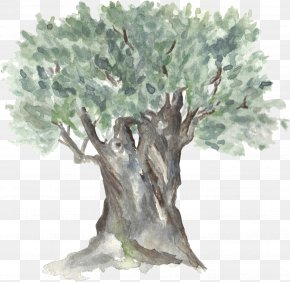 Hand-painted Watercolor Trees PNG