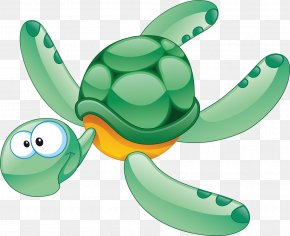 Turtle - Turtle Aquatic Animal Clip Art PNG