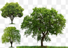 Arbor Day Tree Planting - Tree Clip Art PNG