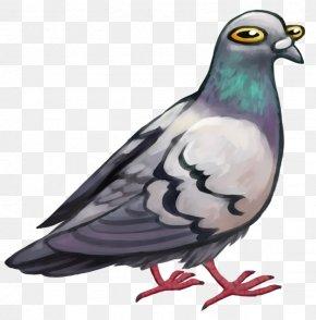 Pigeon - Columbidae Bird Domestic Pigeon Stock Dove Digital Art PNG