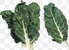 Cruciferous Vegetables Spring Greens - Leaf Vegetable Chard Collard Greens Vegetable Lacinato Kale PNG