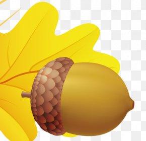 Acorn Image - Fruit Acorn Oak PNG