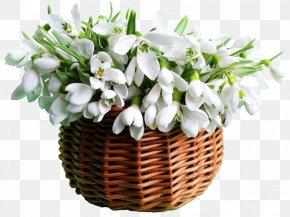 Snowdrop - Snowdrop Flower Bouquet Zakazat' Buket Garden Roses PNG