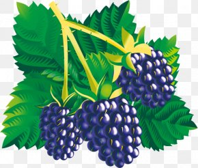 Mulberry Child - Blackberry Fruit Clip Art PNG