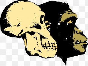 Vector Skull And Gorilla Head - Ape Human Evolution Homo Sapiens Creationism PNG