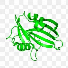 Leaf - Clip Art Leaf Product Design Plant Stem PNG