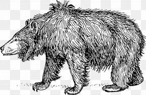 Bear - Brown Bear Sloth Bear American Black Bear PNG